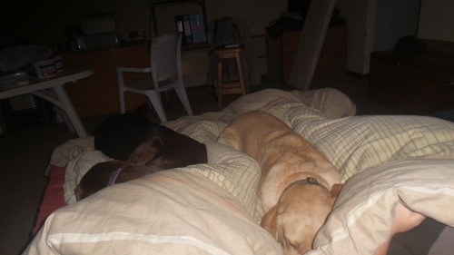 this is winter normality - Penny and Riddick squished on the bed and fast asleep with my Glugster and I