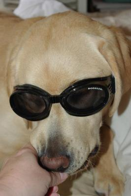 ~~Riddick with his new grown-up Doggles~~