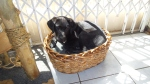 20140905_115824_Annie_Just fits in the cat basket