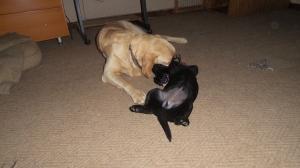 20141007_054144_PuppyE and Riddick