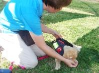 Our Puppy Raising Supervisor demonstrating on Raffi