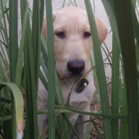 Playing hide-n-seek with Penny in the garden